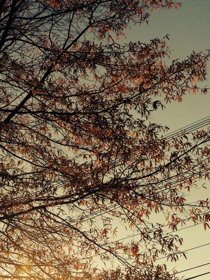 powerlinetree