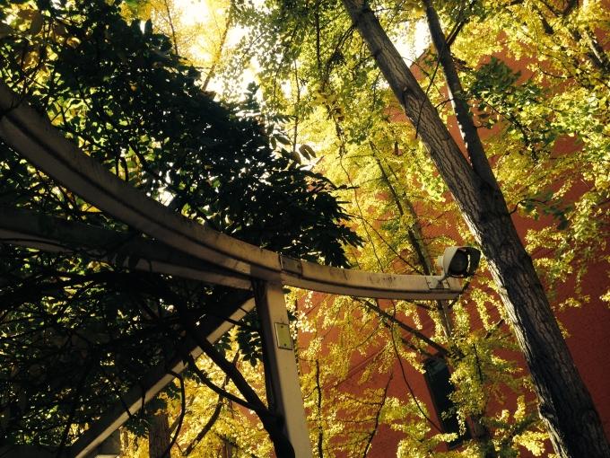 arboredge