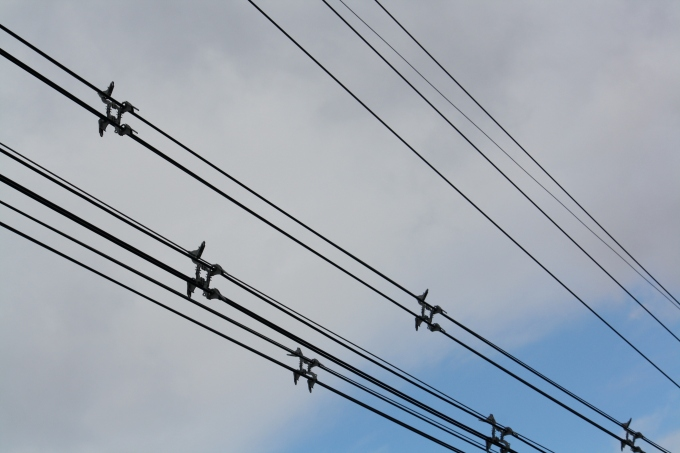 powerlines1