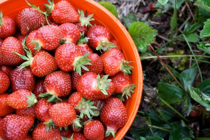 foodstrawberries2