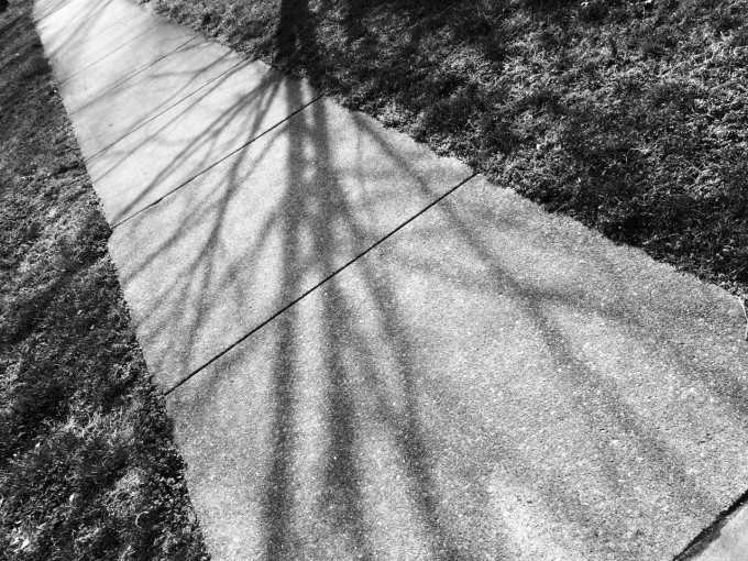 black and white photo of a sidewalk with shadows of tree limbs in sunlight